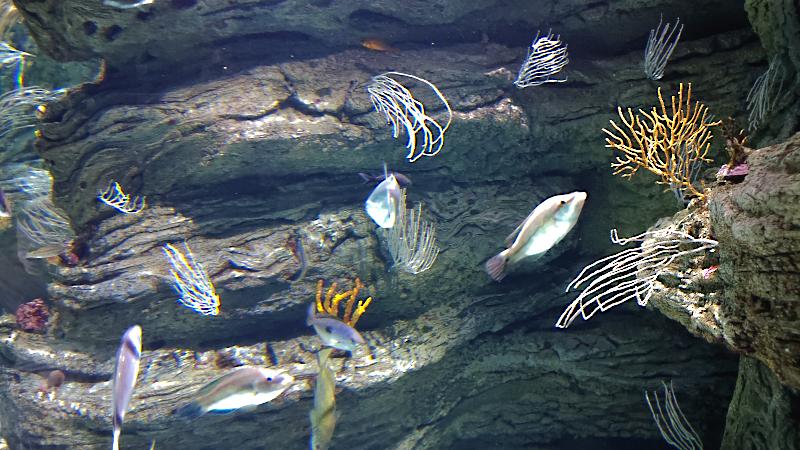 Aquarium du Biodiversarium de Banyuls-sur-Mer