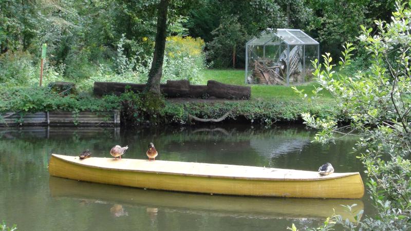 Des canards sur une barque dorée à la feuille dans les hortillonnages