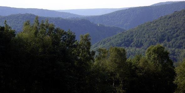 Forêt des Ardennes.