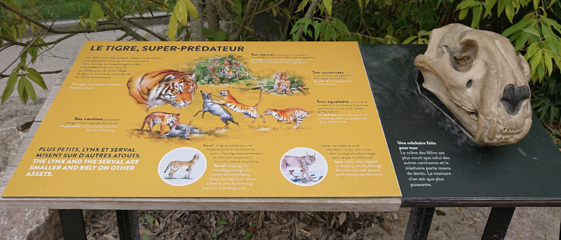 Table relief du tigre
