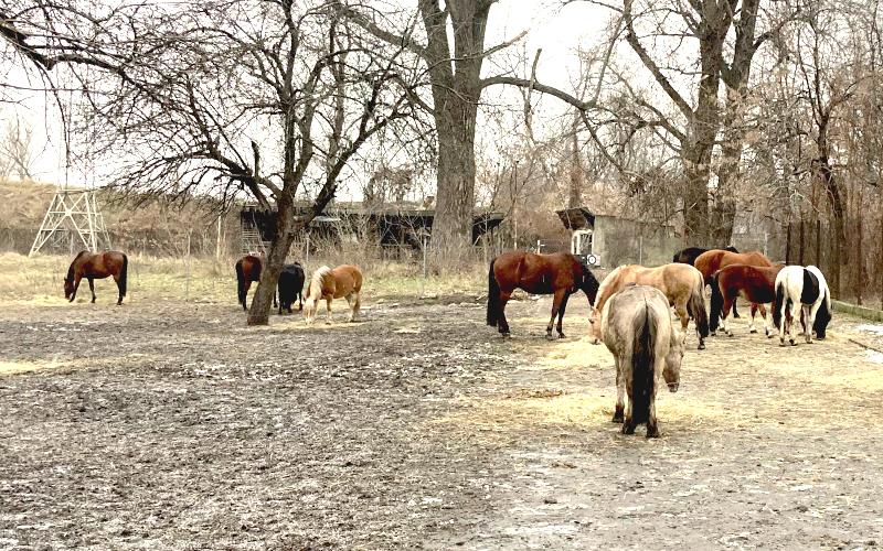 Une partie des chevaux utilisés pour l'hippothérapie et l'équitation classique ©Pauline Boudier